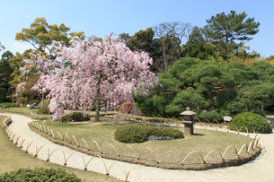 城南宮 桜咲く桃山の庭の写真素材 [FYI03846776]