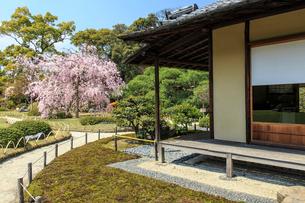 城南宮 桜咲く桃山の庭の写真素材 [FYI03846778]