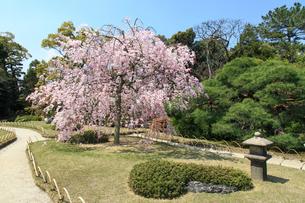 城南宮 桜咲く桃山の庭の写真素材 [FYI03846781]