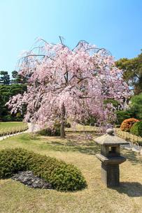 城南宮 桜咲く桃山の庭の写真素材 [FYI03846783]