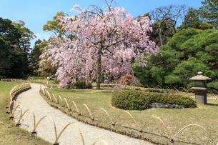 城南宮 桜咲く桃山の庭の写真素材 [FYI03846785]