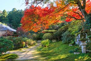 秋の実光院庭園 契心園の写真素材 [FYI03846820]