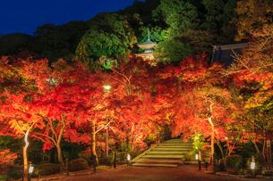 秋の永観堂 ライトアップされる多宝塔と紅葉の写真素材 [FYI03846833]