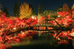 秋の永観堂 ライトアップされる放生池と紅葉の写真素材 [FYI03846834]