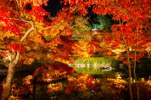 秋の永観堂 ライトアップされる放生池と紅葉の写真素材 [FYI03846835]