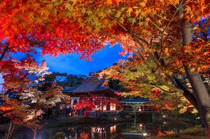 秋の高台寺 ライトアップされる開山堂と臥龍池の写真素材 [FYI03846857]