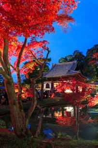 秋の高台寺 ライトアップされる開山堂と臥龍池の写真素材 [FYI03846859]