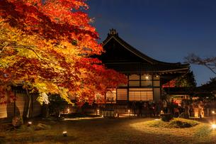 秋の高台寺 ライトアップされる方丈と庭園の写真素材 [FYI03846860]