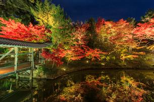 秋の高台寺 ライトアップされる臥龍廊と臥龍池の写真素材 [FYI03846861]