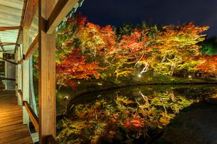 秋の高台寺 ライトアップされる臥龍廊と臥龍池の写真素材 [FYI03846863]