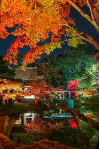 秋の高台寺 ライトアップされる開山堂と臥龍池の写真素材 [FYI03846864]