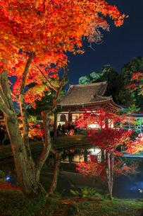 秋の高台寺 ライトアップされる開山堂と臥龍池の写真素材 [FYI03846865]