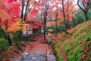 秋の常寂光寺仁王門の写真素材 [FYI03846872]