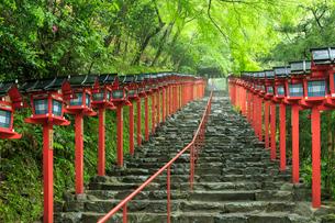 雨にぬれる貴船神社の写真素材 [FYI03846917]