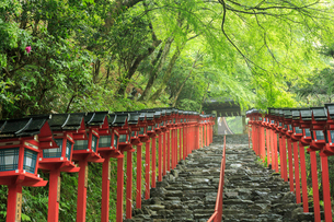 雨にぬれる貴船神社参道の写真素材 [FYI03847018]