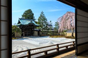 高台寺方丈から見るしだれ桜咲く波心庭と勅使門の写真素材 [FYI03847158]