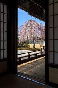 高台寺方丈から見るしだれ桜咲く波心庭の写真素材 [FYI03847213]
