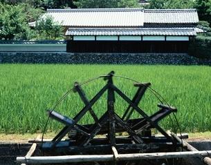 水田と水車    京都の写真素材 [FYI03847392]