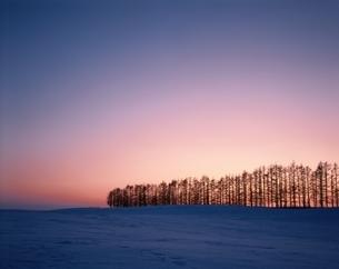 雪原と並ぶ木々のシルエット 美瑛 北海道の写真素材 [FYI03847652]