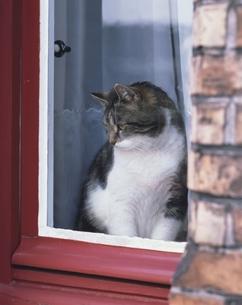 窓辺の猫 ローテンブルク ドイツの写真素材 [FYI03847765]