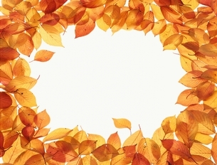 落葉で作ったフレームの写真素材 [FYI03847798]