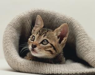 帽子と子猫の写真素材 [FYI03847853]