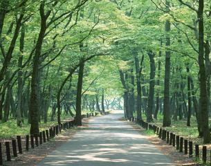 緑の並木道 相模原 神奈川県の写真素材 [FYI03847926]