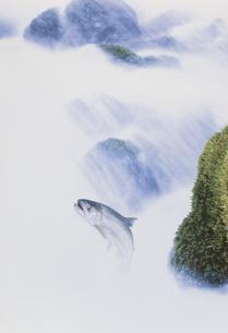渓流を登るアメマスのイラスト素材 [FYI03847955]