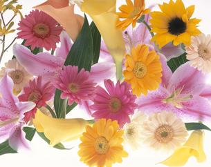 複数の多種類の花のアップの写真素材 [FYI03847999]