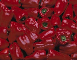 赤ピーマンの写真素材 [FYI03848034]