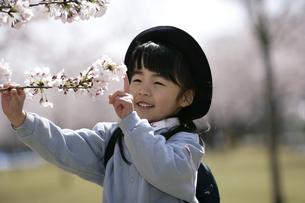 桜の木に触れる制服姿の女の子の写真素材 [FYI03848122]