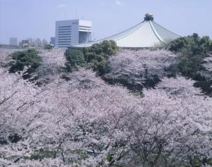 武道館と千鳥が淵の桜 東京都の写真素材 [FYI03848302]