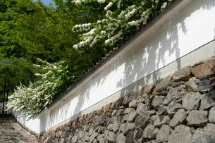 長谷寺梅心院の土塀の写真素材 [FYI03848427]