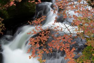 秋の竜頭の滝とツツジ紅葉の写真素材 [FYI03848504]