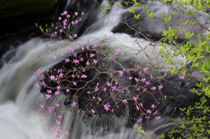 日光竜頭の滝とツツジの写真素材 [FYI03848512]
