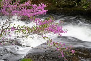 日光竜頭ノ滝とツツジの写真素材 [FYI03848536]
