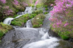 日光竜頭ノ滝とツツジの写真素材 [FYI03848544]