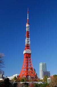 東京タワーの写真素材 [FYI03849110]