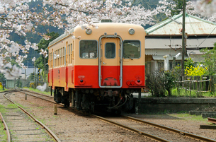 桜と高滝駅の列車の写真素材 [FYI03849144]