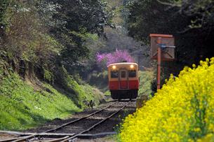 小湊鉄道と線路脇の菜の花の写真素材 [FYI03849150]