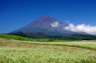 ソバ畑と富士山の写真素材 [FYI03849195]