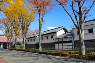 けやき並木と旧田中家住宅の写真素材 [FYI03849362]