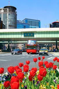 日本橋とチューリップの写真素材 [FYI03849520]
