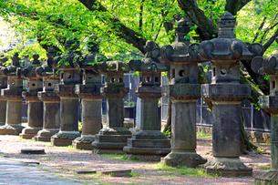 上野東照宮参道の石灯籠の写真素材 [FYI03849542]