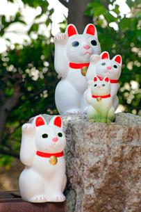 豪徳寺 招き猫の写真素材 [FYI03849620]