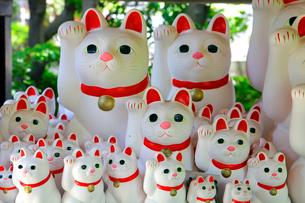 豪徳寺 招き猫の写真素材 [FYI03849623]