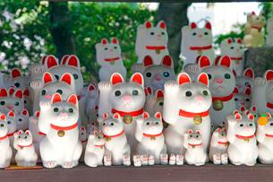 豪徳寺 招き猫の写真素材 [FYI03849624]