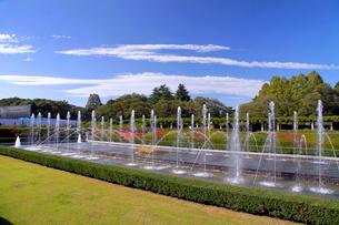 神代植物公園 バラ園の噴水の写真素材 [FYI03849668]