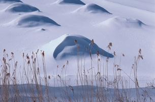 雪の造形     青森県の写真素材 [FYI03849728]