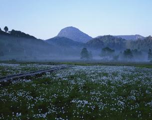 笠ヶ岳に咲くワタスゲの花 志賀高原 長野県の写真素材 [FYI03849832]